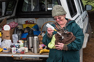 Wildlife carer Sandy Carey taking an orphaned Kangaroo Island joey (Macropus fuliginosus fuliginosus) on a morning excursion and giving her a feed whilst the tea brews.? July, 2015. Grassdale, Kangaro... - Doug Gimesy