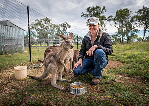 Wildlife carer Sonya Plant feeding a rescued Eastern Grey kangaroo joey (Macropus giganteus). ??April, 2017, ?Linthorp, Queensland, Australia.? Editorial use only. - Doug Gimesy