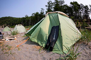 Diving fins resting against tent on beach with coniferous forest in background. In Vrangel Bay where Bowhead whale (Balaena mysticetus) congregate in summer. Primorsky Krai, Russia. August 2019.  -  Franco  Banfi