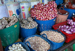 Onions, Garlic and Shallots (Allium spp) in plastic baskets on market stall, Bangkok food market, Thailand. 2015.  -  Nigel Cattlin