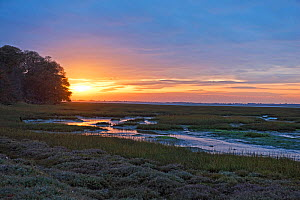 Mudflats of Chichester Channel at low tide, at sunset. Itchenor, West Sussex. November 2016.  -  Nigel Cattlin