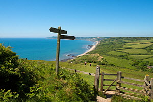 Southwest coast path through National Trust's Golden Cap Estate, looking west towards Charmouth. Lyme Bay, Dorset, England, UK. May 2017.  -  Nigel Cattlin