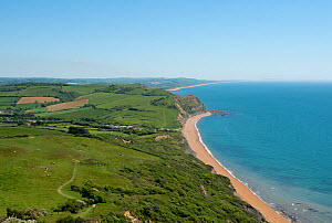 View from Golden Cap, looking east across National Trust land to Seatown, West Bay and Chesil Beach. Jurassic Coast, Dorset, England, UK. May. - Nigel Cattlin