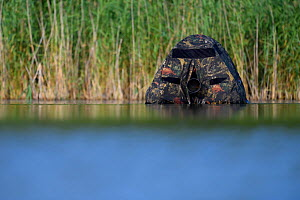Floating hide with camera lens visible, for photography in the Nemunas Delta Nature Reserve, Lithuania.  -  Staffan Widstrand