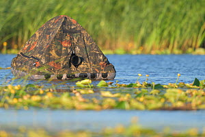 Floating Hide for photography in the Nemunas Delta Nature Reserve, Lithuania.  -  Staffan Widstrand