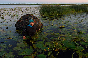 Phographer Oscar Dominguez in water with floating hide in the Nemunas Delta Nature Reserve, Lithuania.  -  Staffan Widstrand