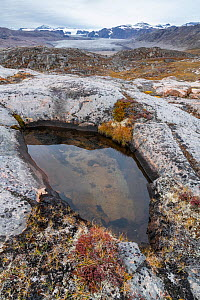 Water-filled pothole and Charcot Glacier in distance, Charcot Havn, Milne Land, Scoresby Sund, Greenland, September.  -  John Shaw