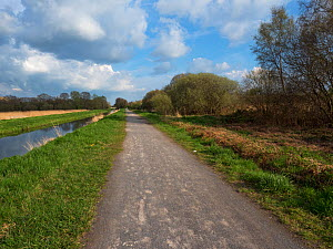 Nature trail and cycle track beside water channel, Shapwick Heath National Nature Reserve, part of the Avalon Marshes, Somerset Levels and Moors, England, UK, April 2019  -  Mike Read
