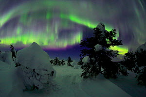 Riisitunturi in winter with Aurora Borealis, Kuusamo, Lapland, Finland. February - Andres M. Dominguez