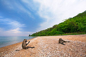Olive baboons (Papio anubis) resting on the shores of Lake Tanganyika. Gombe National Park, Tanzania.  -  Anup Shah