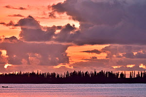 Coast of l'Île-des-Pins with the New Caledonia pines (Araucaria columnaris) that gave the name to the island at sunset, New Caledonia, Pacific Ocean.  -  Pascal Kobeh
