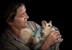 Alice Roser, worker at Currumbin Wildlife Sanctuary feeding Greater glider (Petauroides volans) 'Grevillea' female, nectar via syringe. Captive animal reared from baby, this glider was rescued...  -  Doug Gimesy