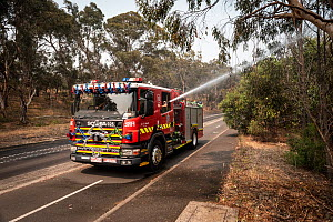 Firefighters from Melbourne's Metropolitan Fire Brigade (MBF) try and help cool down Melbourne's Yarra Bend Grey-headed Flying-fox (Pteropus poliocephalus) colony by spraying water on them.  Park Ra... - Doug Gimesy