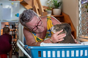 Sue Swain with rescued bush fire victim koala (Phascolarctos cinereus) named 'Sooty'. Sooty was very badly burnt during the Taree bushfires (NSW) in November 2019. His nose, hands, feet and chin were...  -  Doug Gimesy