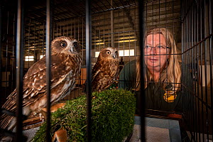 Jacky Hunt, a specialist in bird rescue and rehabilitation, with two Boobook owls (Ninox boobook), which she is providing temporary accommodation for in her factory. These birds were evacuated from th...  -  Doug Gimesy