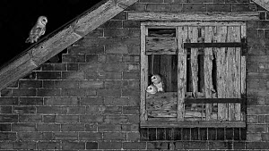 Barn owl (Tyto alba) young in nest about to fledge, Lincolnshire, UK. Highly commended in the Black and White Category of the BWPA Photography competition 2019.  -  Andy Rouse
