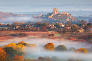 Corfe Castle in early morning mist, Dorset, England, UK, October 2018. - Guy Edwardes