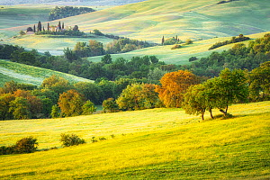 Countryside in the Val d'Orcia in Spring, Tuscany, Italy - Guy Edwardes