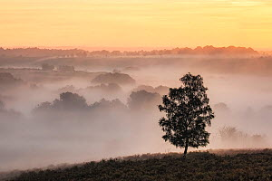 Dawn over Mogshade Hill, New Forest National Park, Hampshire, England, UK - Guy Edwardes
