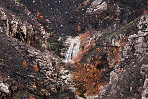 Waterfall at Montagu Pass, Outeniqua Mountains, Western Cape Province, South Africa. Fynbos habitat scorched and damaged by fires in September 2018. Photo taken December 2018.  -  Richard Du Toit