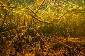 Debris of reed, other aquatic plants and wood in a small creek of the Berner Seeland, between Lake Morat and Lake Neuchatel. Close to Witzwil, Canton of Berne, Switzerland, April.  Photographed for T... - Michel Roggo