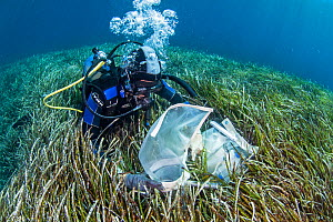 A researcher collecting data from the seagrass meadows (Posidonia oceanica), Sigri, Lesvos, North Aegean. The continous monitoring of the ecological status of the seagrass meadows is an inherent part...  -  Dimitris Poursanidis