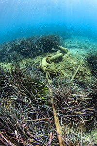 Seagrass meadows face several pressures and threats globally, including uncontrolled anchorage, which destroys the seagrass roots and exposes buried carbon. causing release of carbon dioxide into the...  -  Dimitris Poursanidis