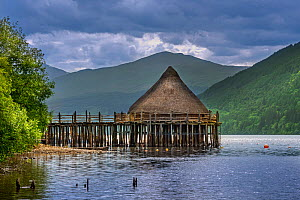 Reconstructed 2500 year old crannog, prehistoric dwelling at the Scottish Crannog Centre on Loch Tay near Kenmore, Perth and Kinross, Scotland, UK. June 2018  -  Philippe Clement