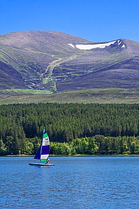 Sailing boat on Loch Morlich in front of the Cairngorm Mountains, Cairngorms National Park, Badenoch and Strathspey, Highland, Scotland, UK. June 2018  -  Philippe Clement