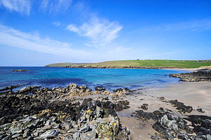 Sandy beach at West Sandwick on the Isle of Yell, Shetland Islands, Scotland, UK, May  -  Philippe Clement