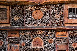 Insect hotel for solitary bees and artificial nesting place for insects / invertebrates offering nest holes / cavities in hollow stems and wood blocks  -  Philippe Clement