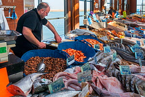 Counter with fresh fish and shrimps on display at covered fish market in the port at seaside resort Port-en-Bessin, Calvados, Normandy, France, 2019  -  Philippe Clement