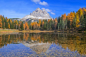 Mountain Drei Zinnen and larch trees reflected in water of Lake Lago d'Antorno in the Tre Cime Natural Park in autumn, Dolomites, South Tyrol, Italy, October - Philippe Clement