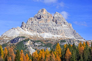 South face of the mountain Drei Zinnen / Tre Cime di Lavaredo and larch trees in the Tre Cime Natural Park in autumn, Dolomites, South Tyrol, Italy, October - Philippe Clement