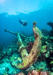 Scuba diver inspecting the massive anchor of the cargo vessel the Cienfuego which sank in 1895, The Bahamas.  -  Shane Gross