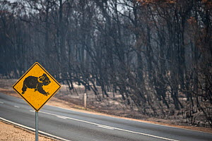 Burned forest and koala road sign in Mallacoota, Australia. This area was devastated by the bushfire a month before this image was taken, leaving much of the native wildlife suffering from traumatic i... - Jo-Anne McArthur / We Animals