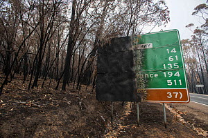 Burned forest and road sign in Mallacoota, Australia. This area was devastated by the bushfire a month before this image was taken, leaving much of the native wildlife suffering from traumatic injurie... - Jo-Anne McArthur / We Animals