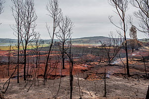The smoke from underground peat continuing to burn rises into the air at Sarsfield, days after bushfires destroyed much of the town and native habitat. Sarsfield, Victoria, Australia. January, 2020 - Doug Gimesy