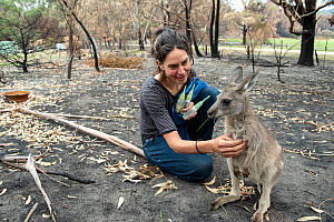 Wildlife rescuer and carer Rena Gaborov with orphaned eastern grey kangaroos (Macropus giganteus) in the burnt-out yard at her mother's property at Sarsfield. Rena and her partner Joseph had to evacua... - Doug Gimesy
