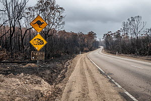 Burnt out watch out for wildlife sign and burnt trees on the Bruthen-Buchan Road, South Buchan. This area was burnt during the November /Dec 2019 fires.? Victoria, Australia. January, 2020 - Doug Gimesy