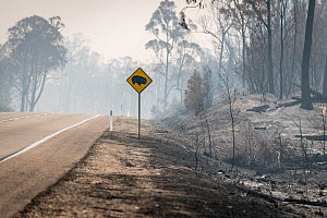 Burnt out watch out for wombats sign on the Great Alpine Road which was burnt during the November/Dec 2019 fires.? Great Alpine Road, Sarsfield, Victoria, Australia. January 2020 - Doug Gimesy