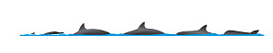 Spinner dolphin (Stenella longirostris) Dive sequence (swimming left to right)     No more than 15 illustrations by Martin Camm, Rebecca Robinson and/or Toni Llobet to be used in a single project...  -  Rebecca Robinson / Carwardine