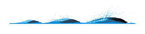 Northern right whale dolphin (Lissodelphis borealis) Dive sequence - slow swimming     No more than 15 illustrations by Martin Camm, Rebecca Robinson and/or Toni Llobet to be used in a single proje...  -  Rebecca Robinson / Carwardine