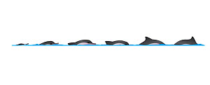 Guiana dolphin (Sotalia guianensis) dive sequence - slow swimming     No more than 15 illustrations by Martin Camm, Rebecca Robinson and/or Toni Llobet to be used in a single project or book editio...  -  Rebecca Robinson / Carwardine