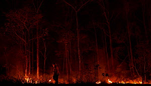 A member of the Angledale Rural Fire Service brigade lights up a backburn to protect the edge of Bermagui township, New South Wales, Australia. January 2020.  -  David Gallan