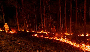 Members of the Angledale Rural Fire Service brigade light up a backburn to protect the edge of Bermagui township, New South Wales, Australia. January 2020.  -  David Gallan