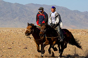 Two riders galloping, Altai, Mongolia.  -  Klein & Hubert