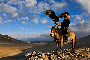 Kazakh eagle hunter (Berkutchi) on horseback with his Golden eagle (Aquila chrysaetos) Altai, Mongolia. Model released.  -  Klein & Hubert