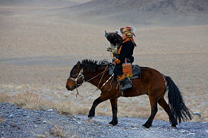 Young Eagle hunter (Berkutchi) on horseback with his Golden eagle (Aquila chrysaetos) Altai, Mongolia. Model released.  -  Klein & Hubert