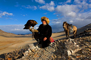 Kazakh eagle hunter (Berkutchi) with his Golden eagle (Aquila chrysaetos) and horse, Altai, Mongolia. Model released.  -  Klein & Hubert